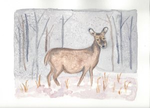Winter water colors deer with grass in the snow