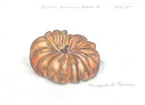 Heirloom Gardens lesson two Pumpkin