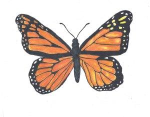 Heirloom Gardens Cone flower butterfly-1