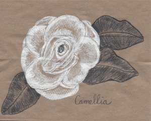 heirloom gardens- camillia-1
