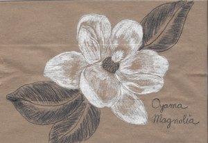 heirloom gardens- camillia