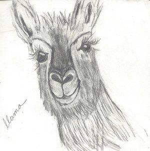 Llama, bee, peas sketchbook